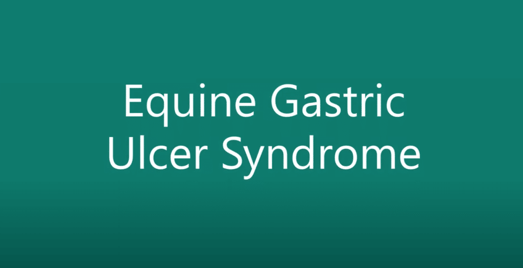 Equine Gastric Ulcer Sundrome Video